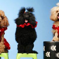 Выступление дрессированных животных на праздник и День Рождения