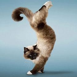 Мини-Тигр-Шоу Кошки!